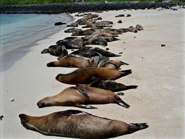 фото погибших морских млекопитающих этом формате поддерживаются