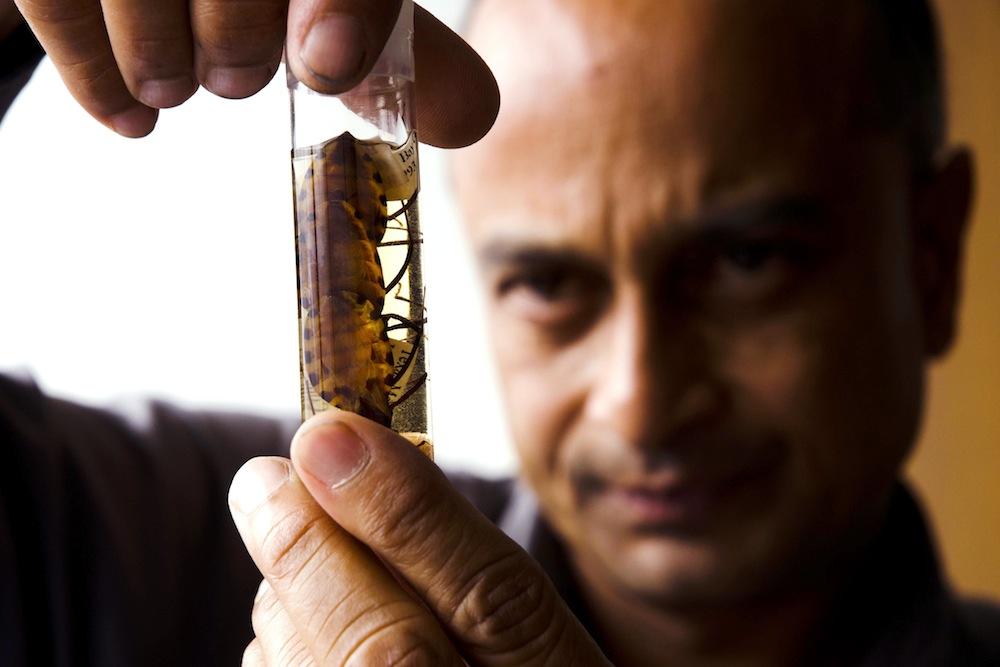 глисты от рыбы в человеке фото