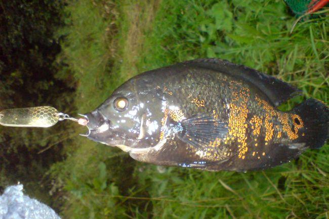 где клюет рыба в кирове