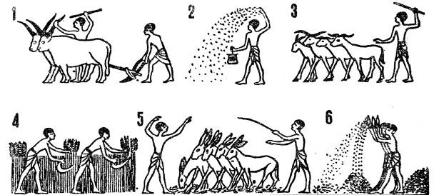 Кто приучил людей к земледелию?