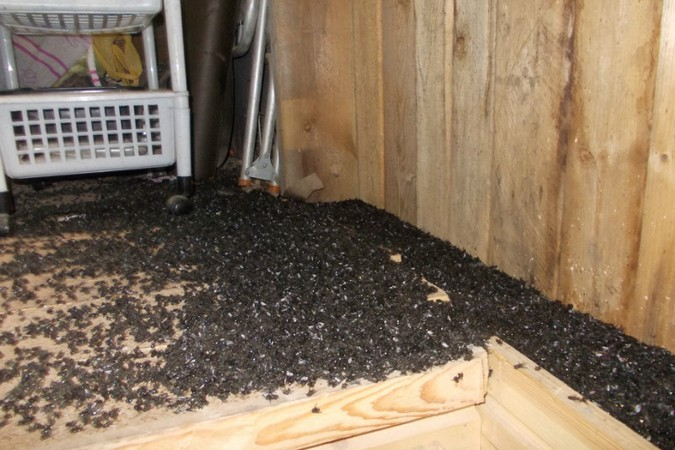 Что ест муха в домашних условиях