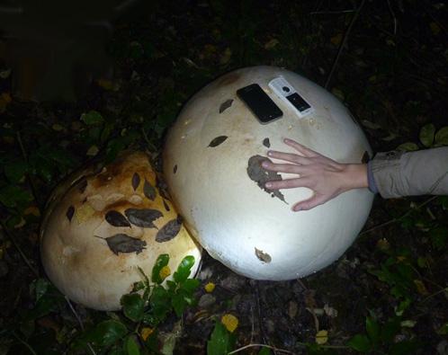 огромный гриб фото