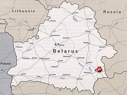 Белорусская Чупакабра