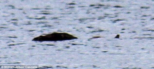 Охотник на Несси заснял нечто у берега Шотландии