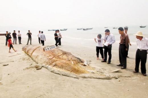 Странная китайская рыба