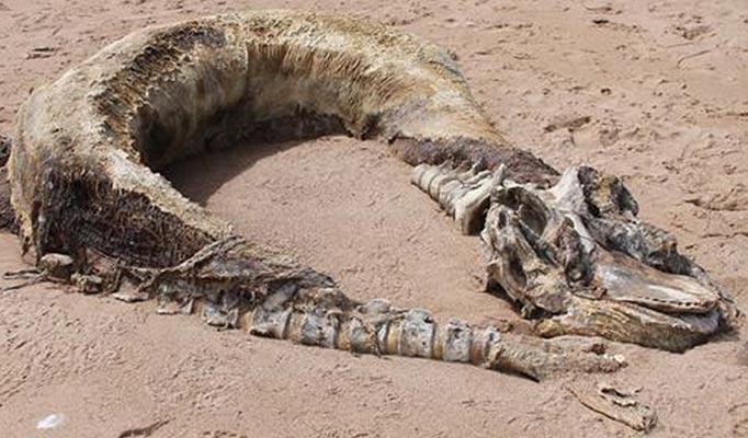 На берег Абердина вынесло останки странного существа