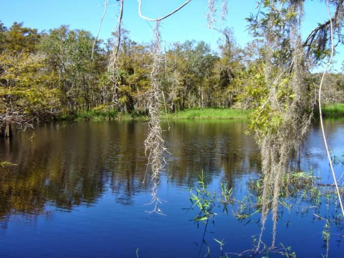 Во Флориде мохнатый йети навестил лагерь рыбаков (2 фото)