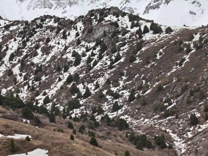 Киик-адам: Снежный Человек из Казахстана (3 фото)
