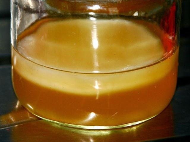 Чайный гриб: Доктор в банке (5 фото)