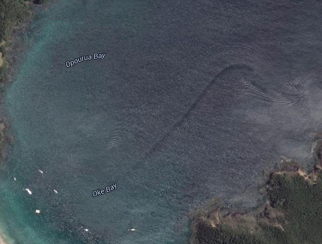 Возле Новой Зеландии заметили неопознанное огромное существо (2 фото)
