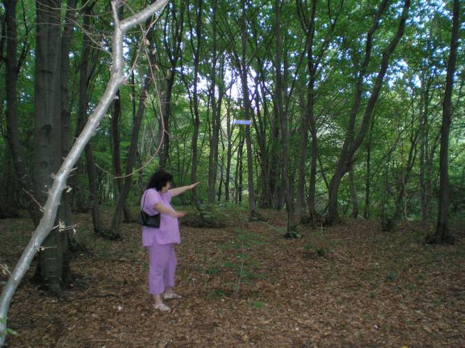 Аномальный лес Хойя-Бачу в Румынии (5 фото)