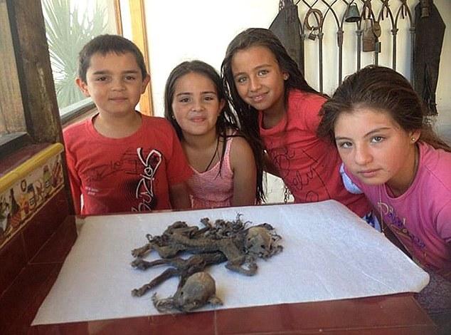Чилийский фермер нашел останки странных существ. Чупакабра?