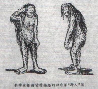 Китайский аналог йети: Древний реликт или одичалый человек?