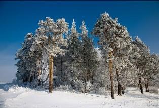 Поход в лес нижегородского севера в поисках аномалий