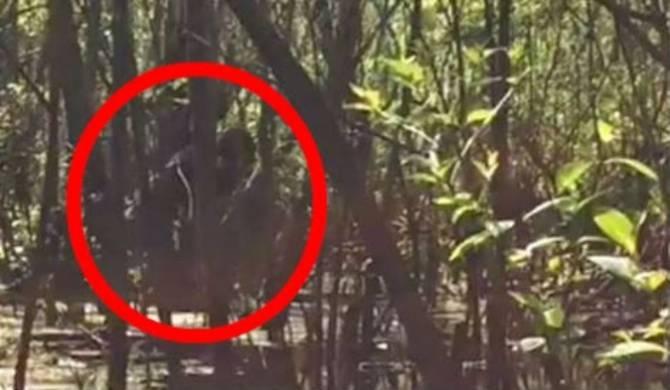 В болоте во Флориде засняли на видео бигфута (+Видео)
