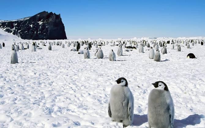 Антарктида: Тайны шестого контитента (4 фото)