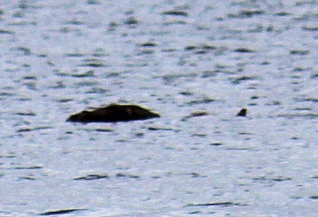 На озере Лох-Несс засняли в воде что-то крупное. Знаменитая Несси? (2 фото)