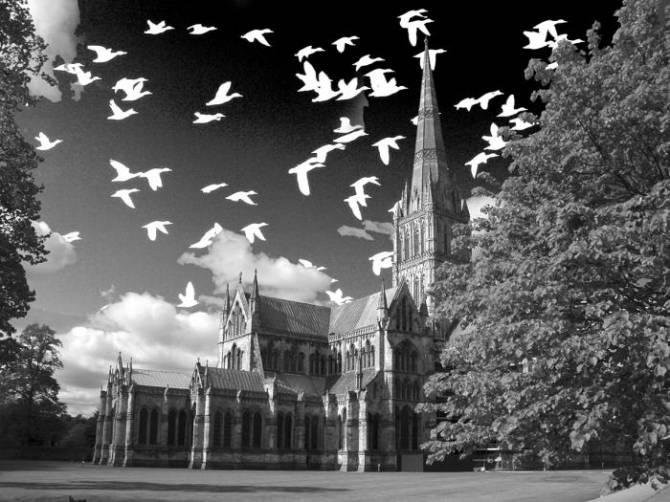 Птицы и животные как предвестники смерти (2 фото)