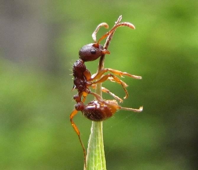 паразиты двуустки в организме человека