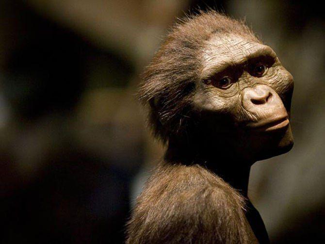 Ինչու է երեք միլիոն տարի առաջ մահացել Լյուսի անունով ավստրալոպիտեկը