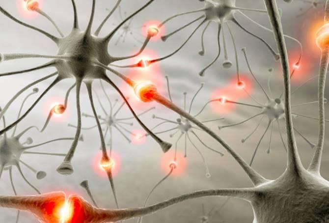 Электрическая стимуляция мозга улучшает память и управляет поведением (4 фото)