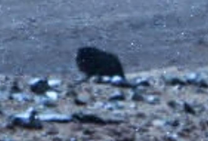 Просто камень или животное? Новое любопытное фото с Марса (4 фото)