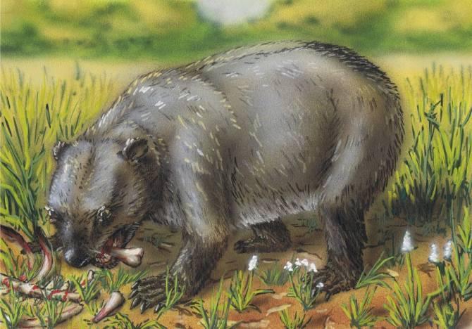 Нанди: Мифический или реальный африканский медведь (3 фото)