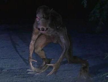 Во Владимирской области видели странное животное, напавшее на кур