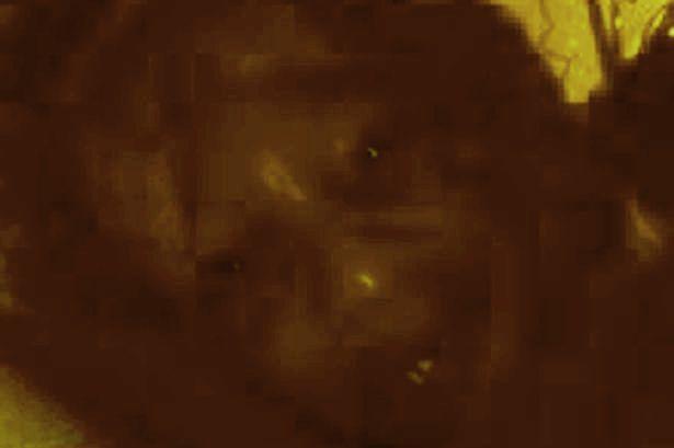 Британский учитель уверен, что сфотографировал демона (2 фото)