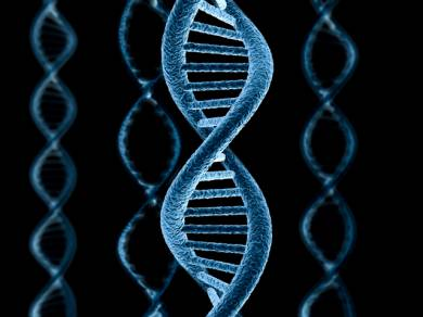 Существует ли генетическая память? (2 фото)