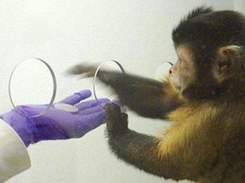 ак деньги превратили обезьяну в человека