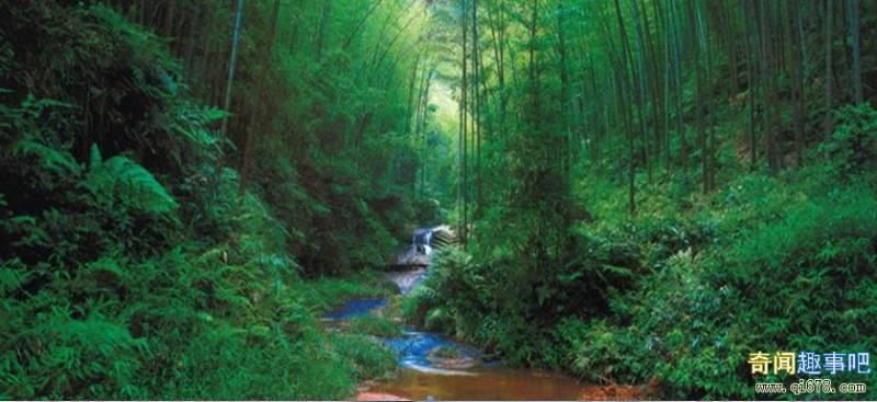 Долина Черного бамбука - одна из сильнейших аномальных зон Земли (5 фото)