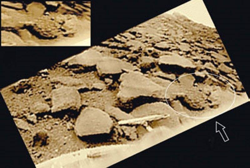 Леонид Ксанфомалити рассказал подробности открытия жизни на Венере  (5 фото)