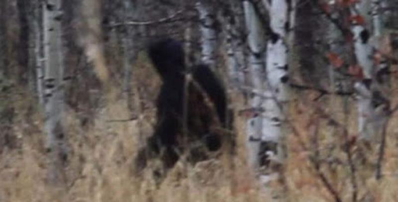 Охотник заснял в лесу черное существо. Йети? (+Видео)