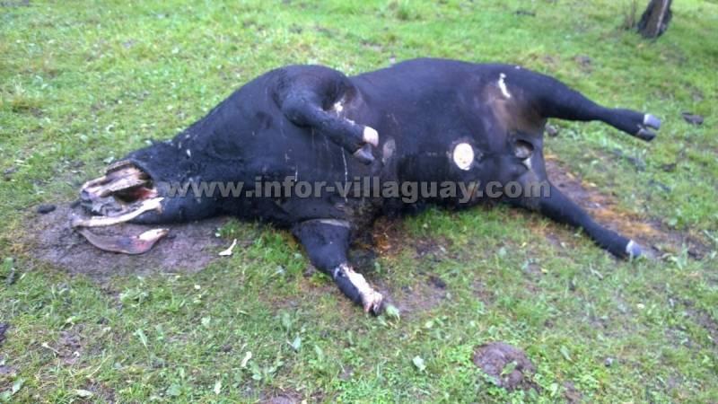 Новые случаи увечья животных в Аргентине (4 фото)