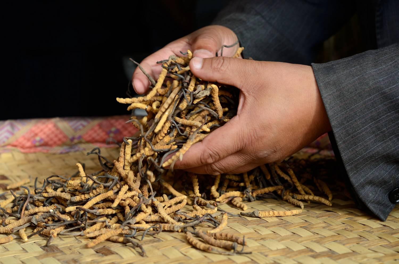 тибетский сбор для очищения организма составляют