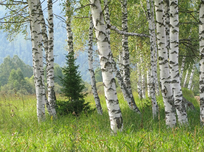 Энергия деревьев