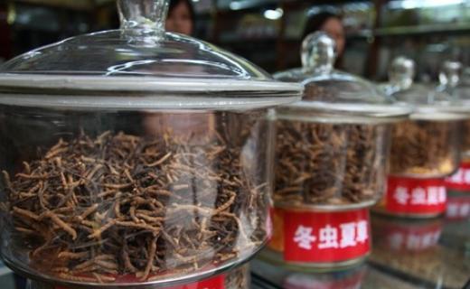 Удивительный тибетский гриб ярсагумба (6 фото)