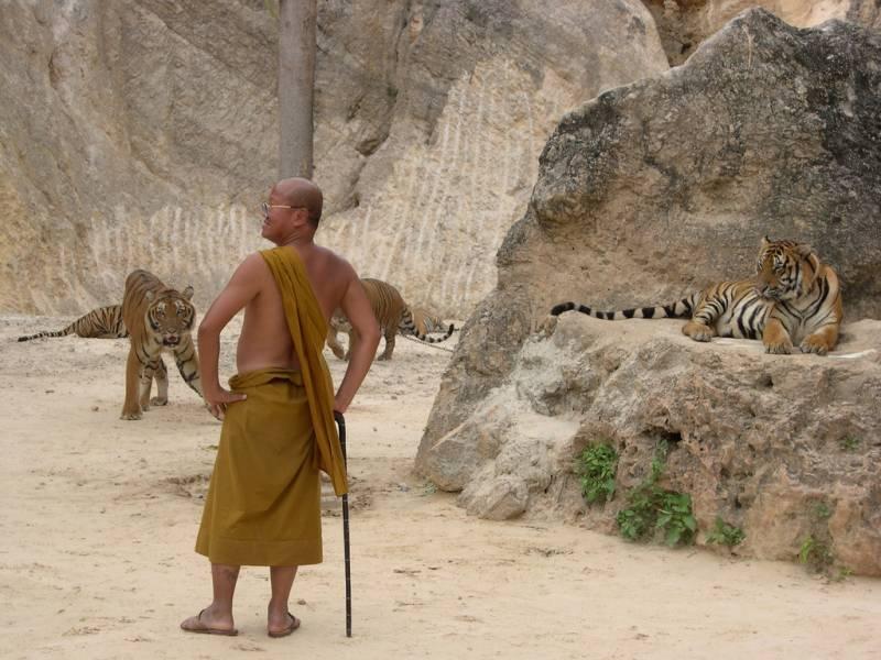 Храмы животных (8 фото)
