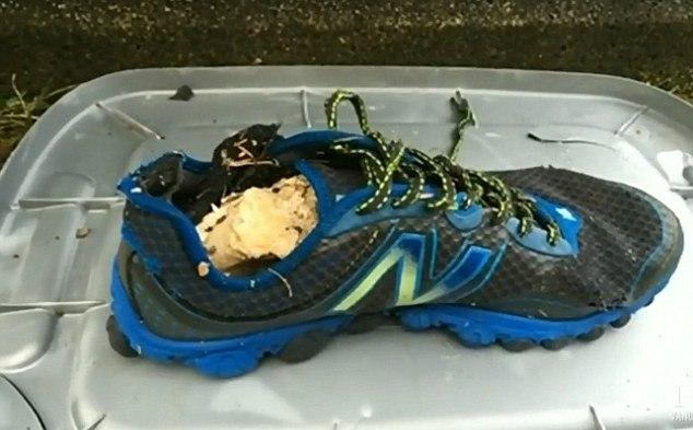 """В Канаде на """"пляж отрубленных ног"""" выбросило очередную ногу в кроссовке (5 фото)"""