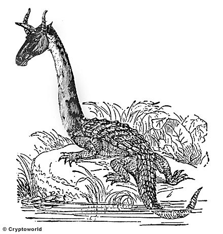 Таинственный гамбийский дракон нинки-нанка