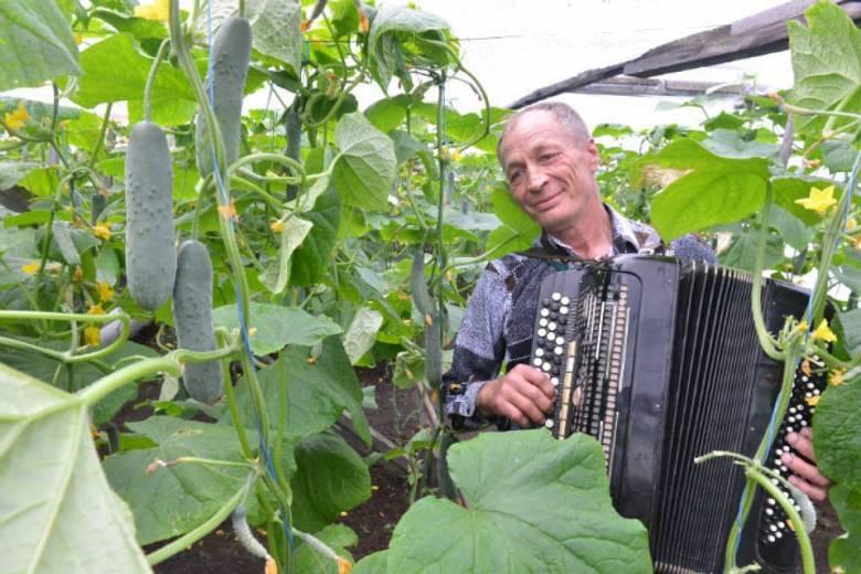Житель Красноярского края играет огурцам на баяне: По его словам так они лучше растут (2 фото)