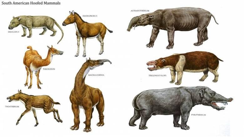 Нестыковки в эволюции: Виды есть, а предков нет (4 фото)