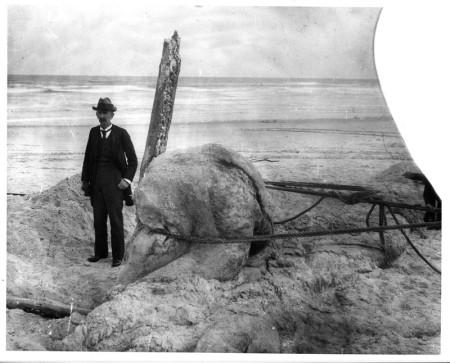 Существо, выброшенное на берег возле Сент-Огастина (4 фото)