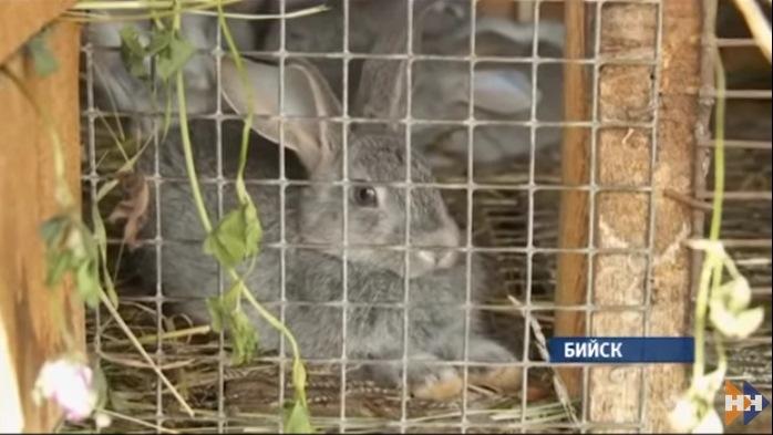 В Бийске неопознанный зверь пьет кровь у кроликов (4 фото)