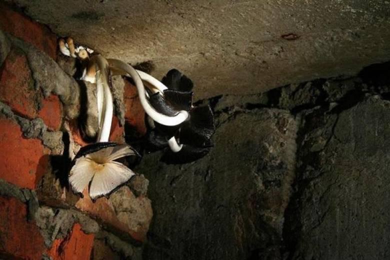 """Москва подземная: Подземные существа - """"трупоеды"""" и """"мопсы"""" (4 фото)"""