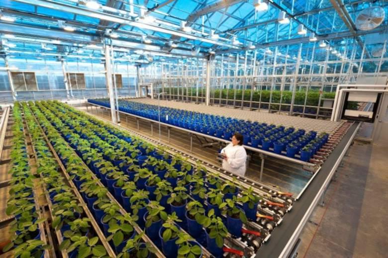 «Monsanto» захватывает Европу: здоровье европейцев будет под контролем США? (3 фото)