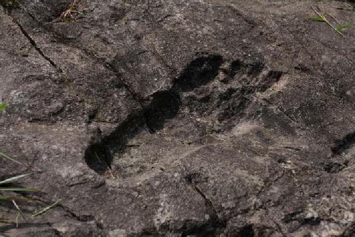 В Китае обнаружили окаменевшие человеческие следы огромного размера