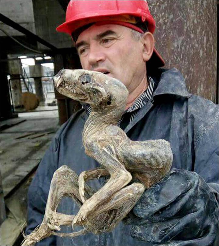 В Якутии нашли уникальную мумию животного (2 фото)