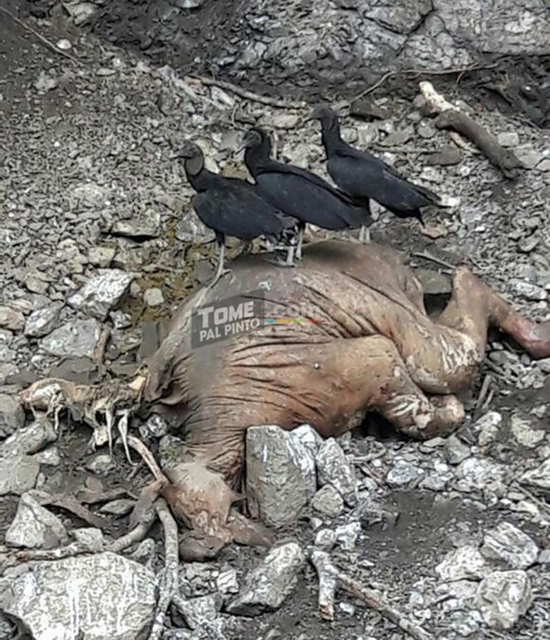 В республике Коста-Рика сфотографировали останки неопознанного животного (6 фото)